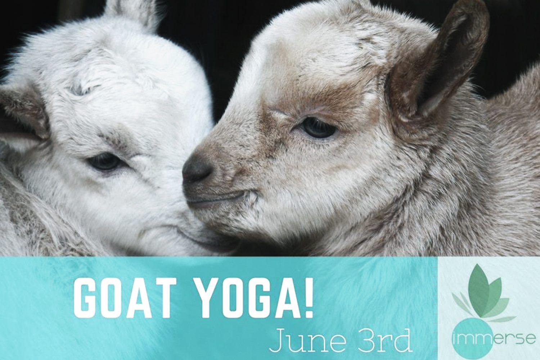 goat yogajoin jaime friends rideau acres campground. Black Bedroom Furniture Sets. Home Design Ideas